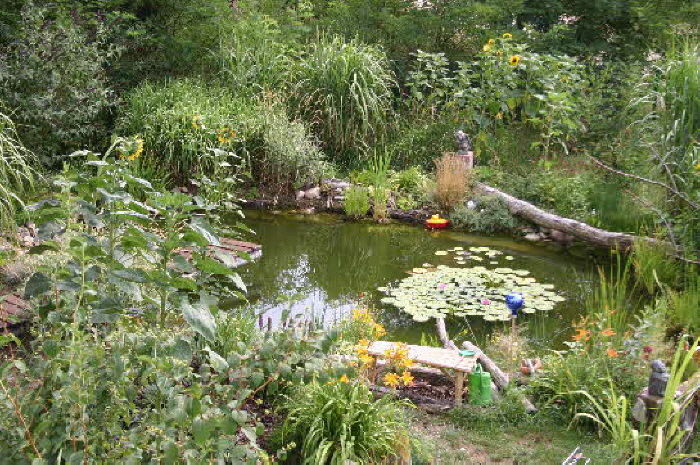 Der teich bezeichnung f r ein wasserloch for Fische im naturteich